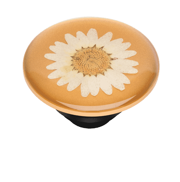 Pressed flower daisy white 08 top